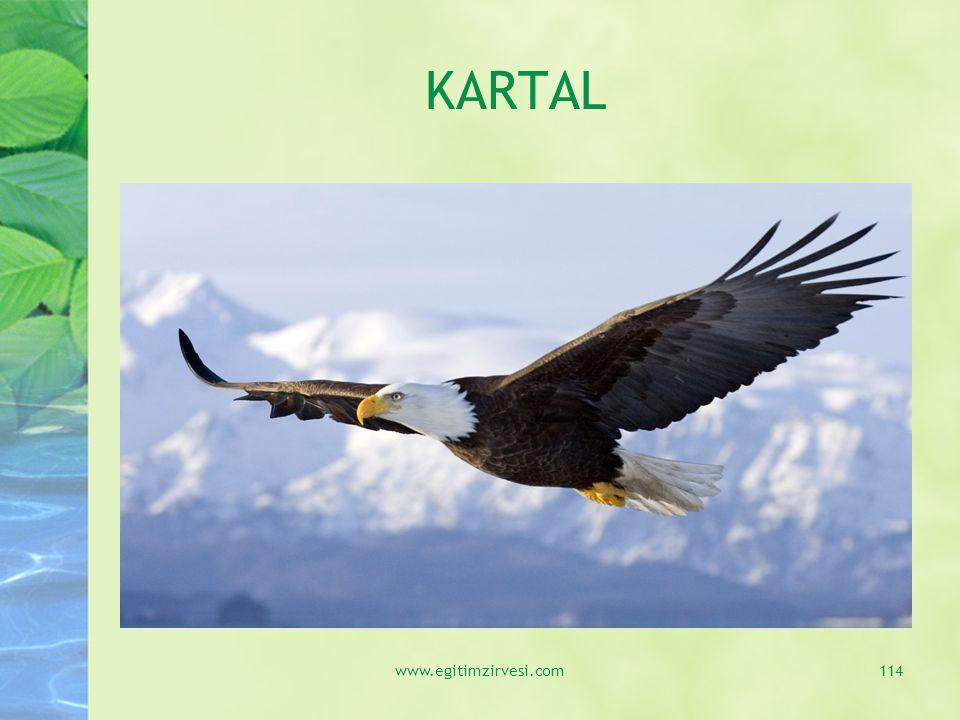 KARTAL www.egitimzirvesi.com