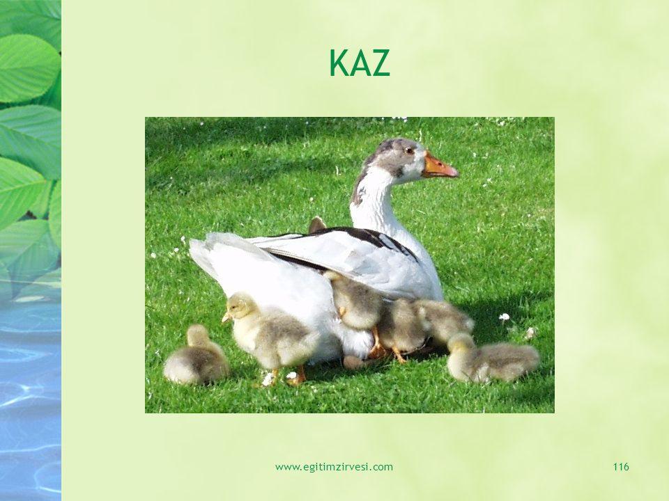 KAZ www.egitimzirvesi.com