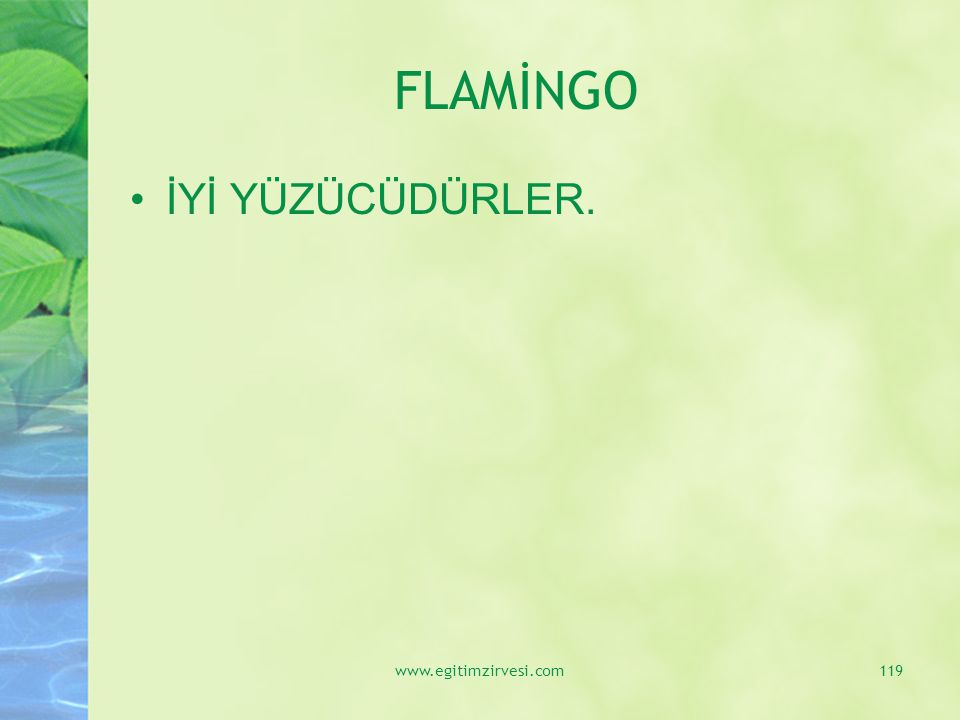 FLAMİNGO İYİ YÜZÜCÜDÜRLER. www.egitimzirvesi.com