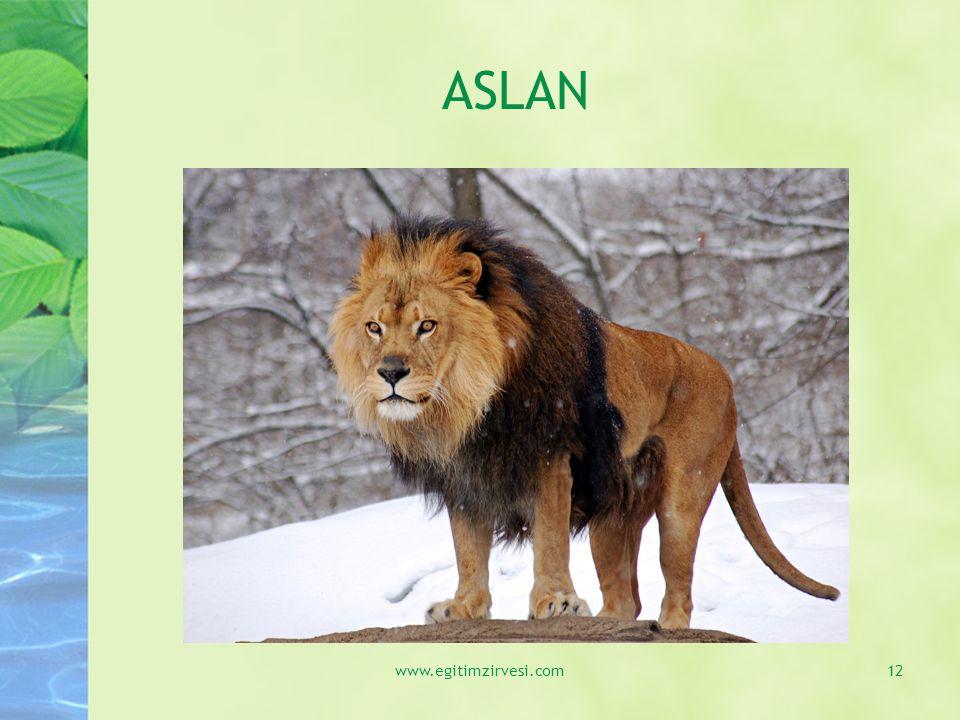ASLAN www.egitimzirvesi.com