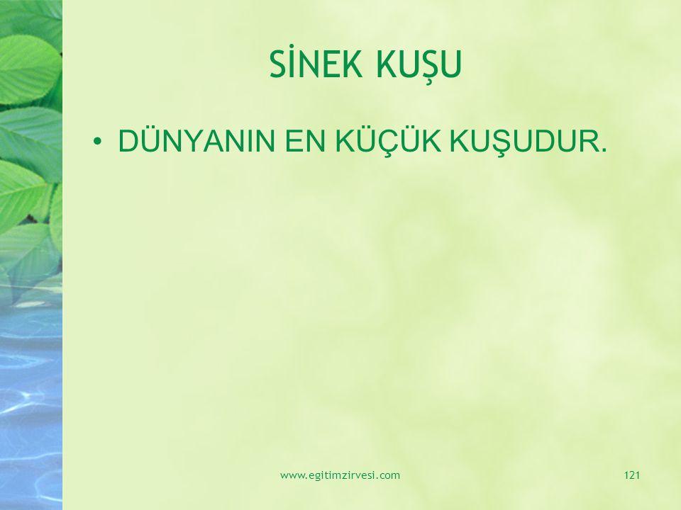 SİNEK KUŞU DÜNYANIN EN KÜÇÜK KUŞUDUR. www.egitimzirvesi.com
