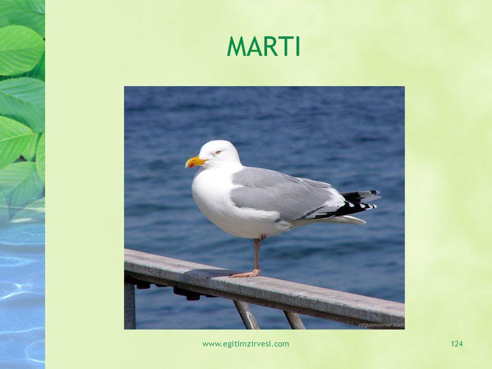 MARTI www.egitimzirvesi.com