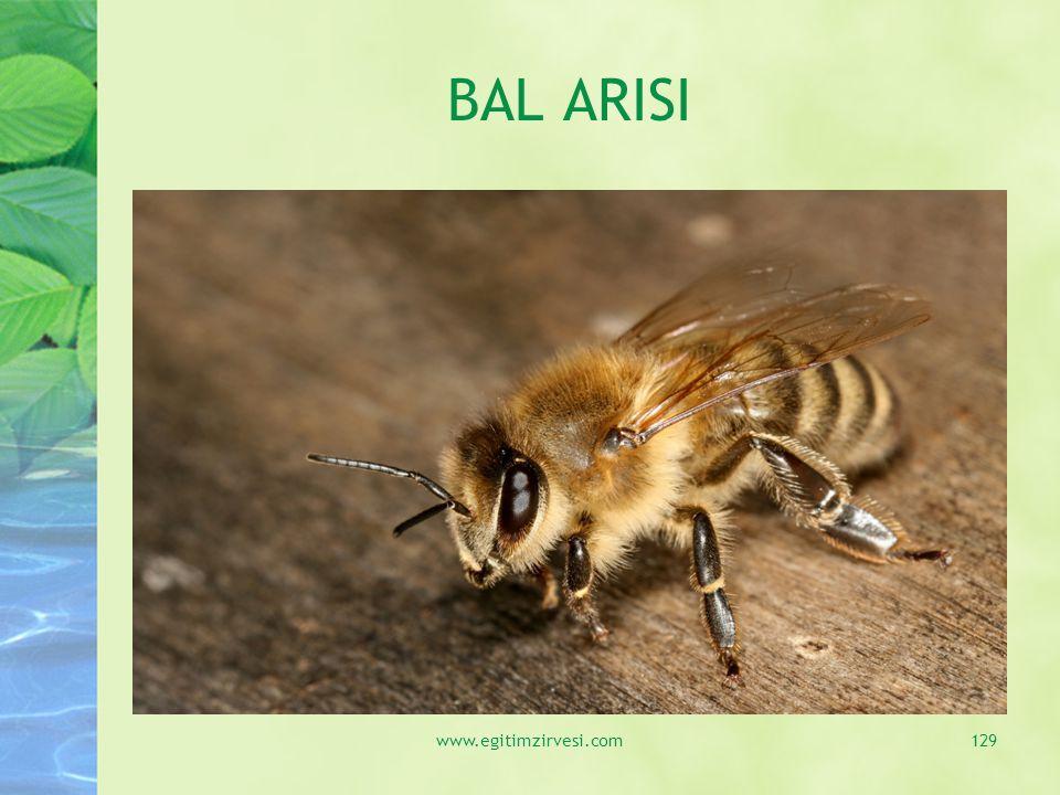 BAL ARISI www.egitimzirvesi.com