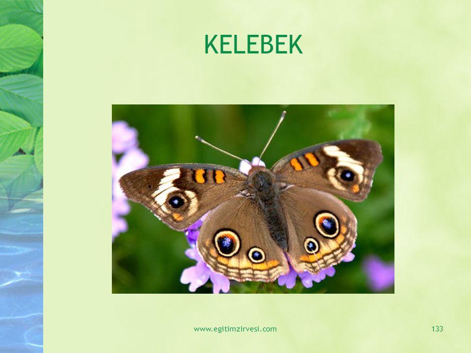 KELEBEK www.egitimzirvesi.com