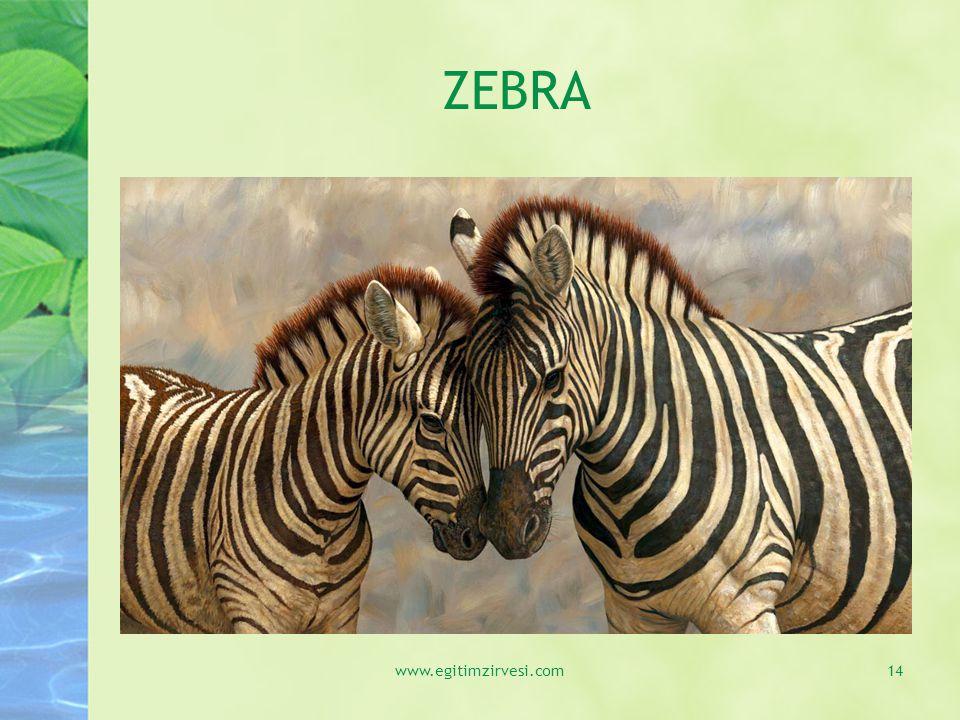 ZEBRA www.egitimzirvesi.com