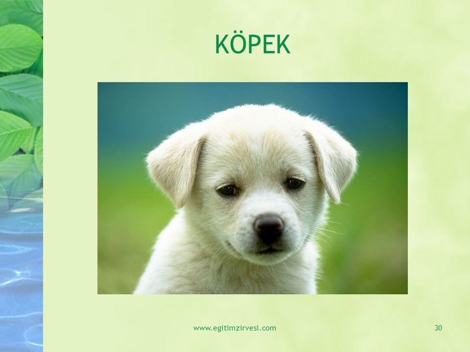 KÖPEK www.egitimzirvesi.com