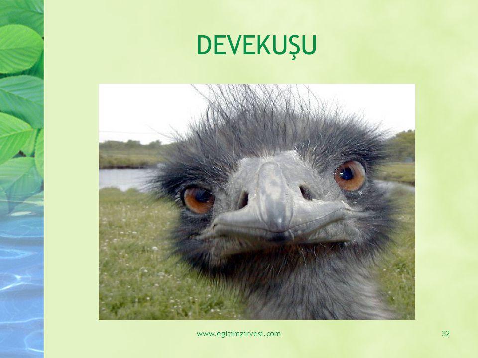 DEVEKUŞU www.egitimzirvesi.com
