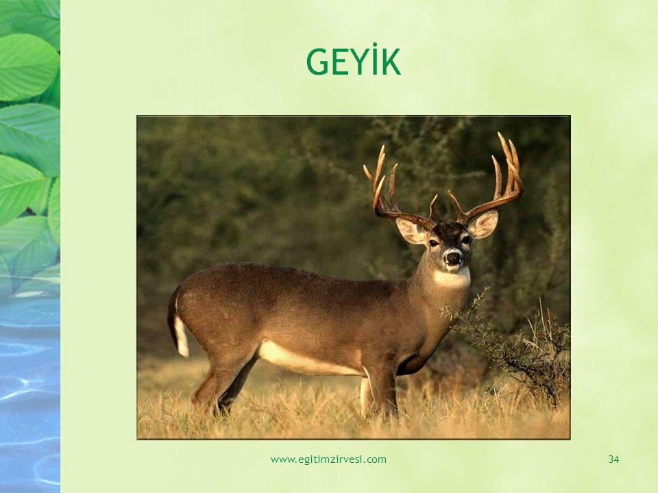 GEYİK www.egitimzirvesi.com