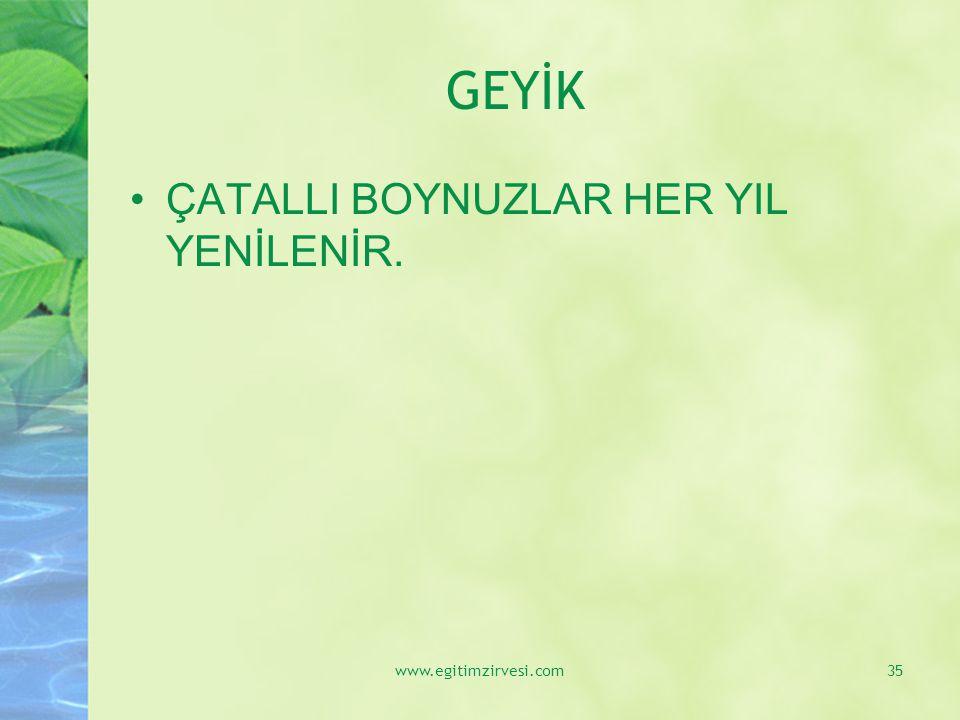 GEYİK ÇATALLI BOYNUZLAR HER YIL YENİLENİR. www.egitimzirvesi.com