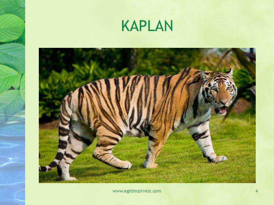 KAPLAN www.egitimzirvesi.com