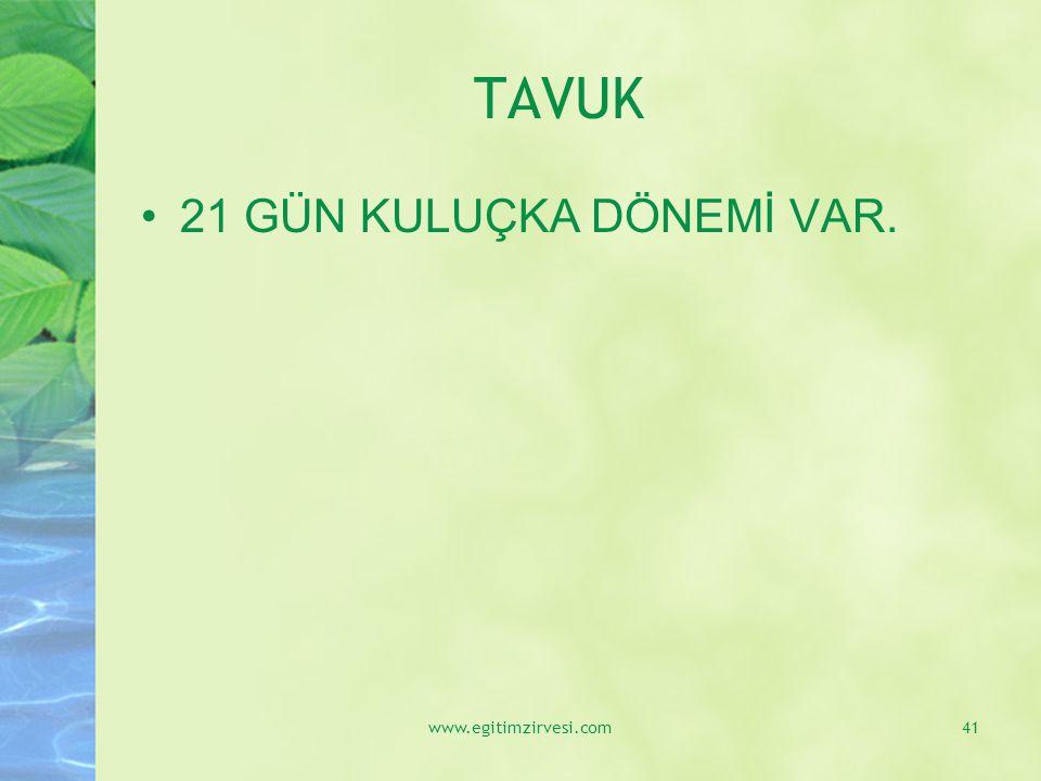 TAVUK 21 GÜN KULUÇKA DÖNEMİ VAR. www.egitimzirvesi.com
