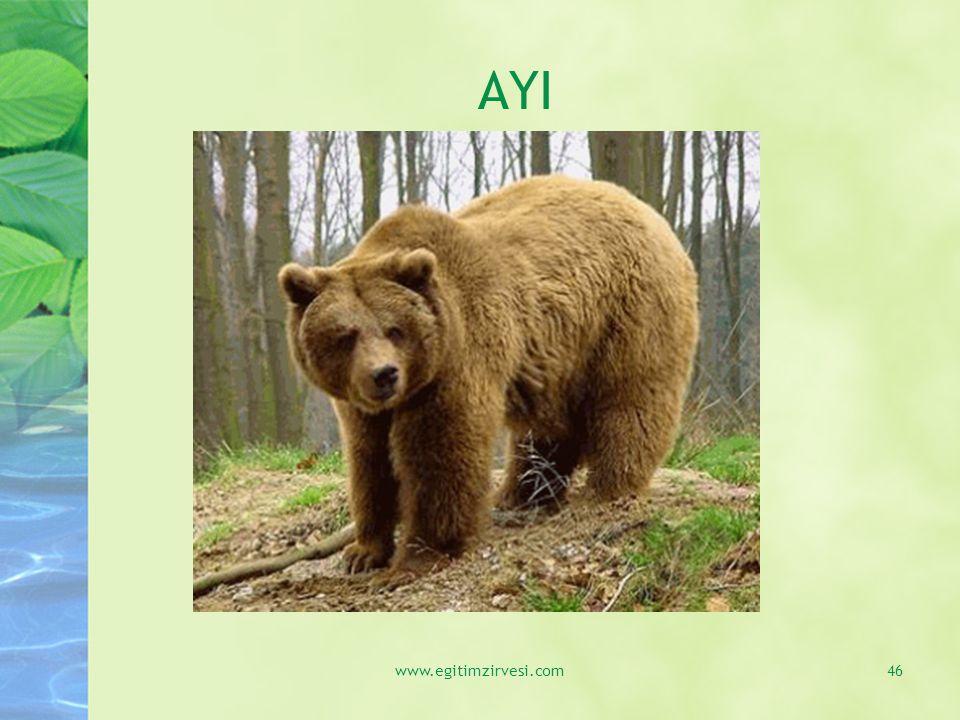 AYI www.egitimzirvesi.com