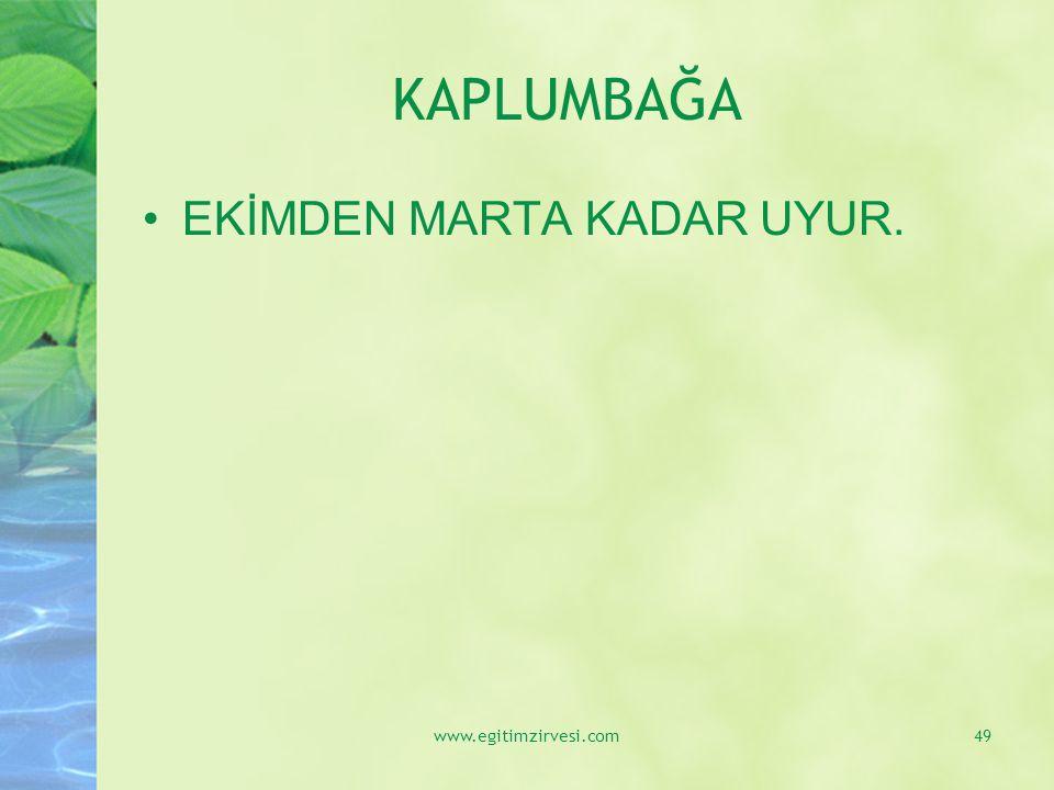 KAPLUMBAĞA EKİMDEN MARTA KADAR UYUR. www.egitimzirvesi.com