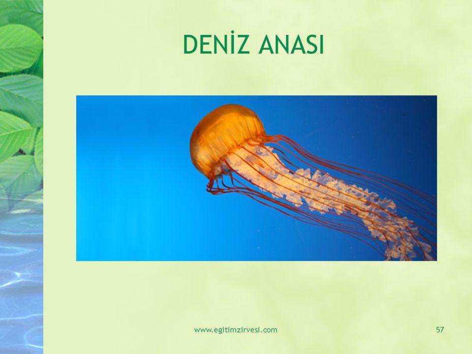 DENİZ ANASI www.egitimzirvesi.com