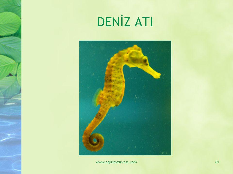 DENİZ ATI www.egitimzirvesi.com