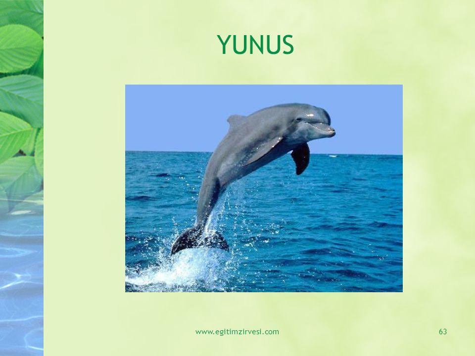 YUNUS www.egitimzirvesi.com