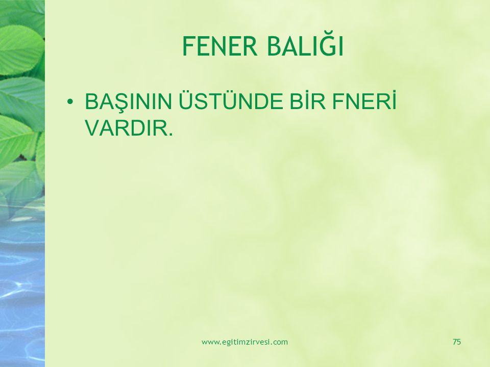 FENER BALIĞI BAŞININ ÜSTÜNDE BİR FNERİ VARDIR. www.egitimzirvesi.com