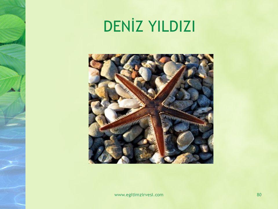 DENİZ YILDIZI www.egitimzirvesi.com