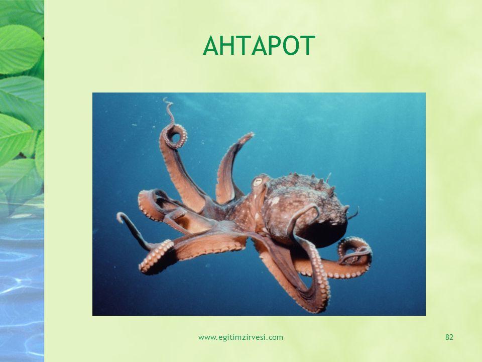 AHTAPOT www.egitimzirvesi.com