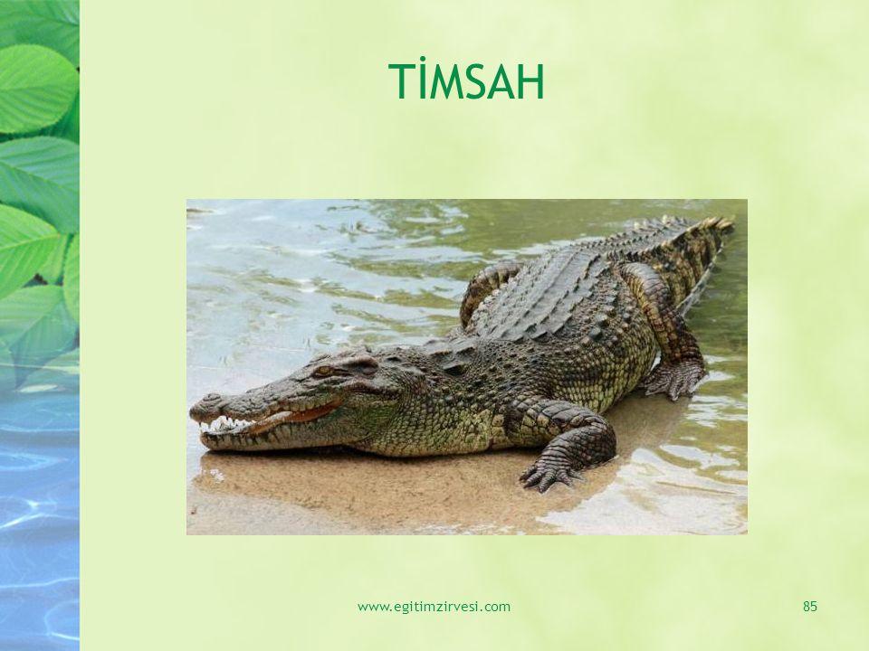 TİMSAH www.egitimzirvesi.com