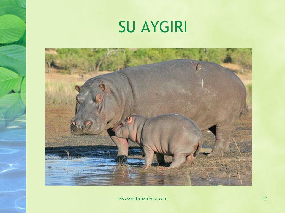 SU AYGIRI www.egitimzirvesi.com