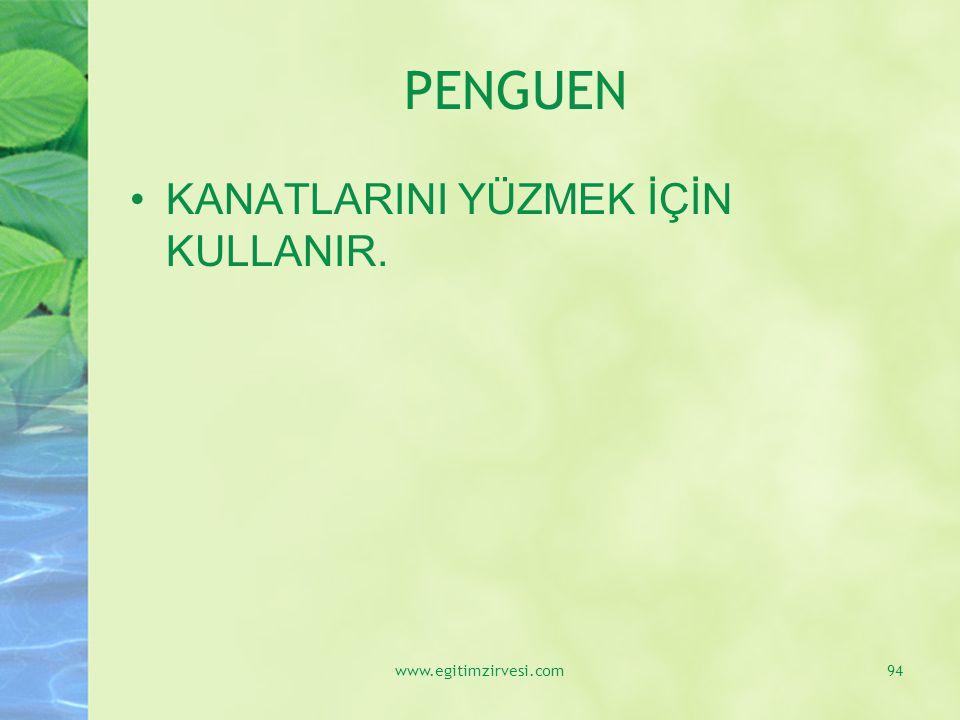 PENGUEN KANATLARINI YÜZMEK İÇİN KULLANIR. www.egitimzirvesi.com