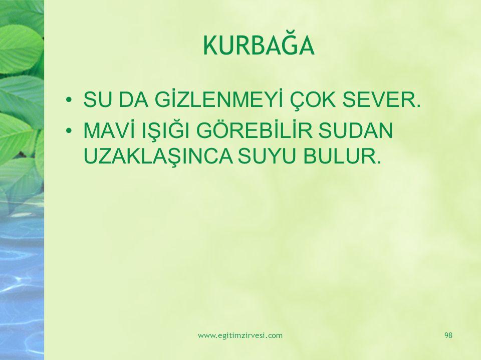 KURBAĞA SU DA GİZLENMEYİ ÇOK SEVER.