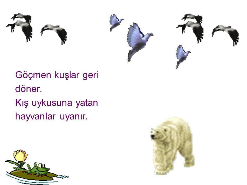 Göçmen kuşlar geri döner. Kış uykusuna yatan hayvanlar uyanır.