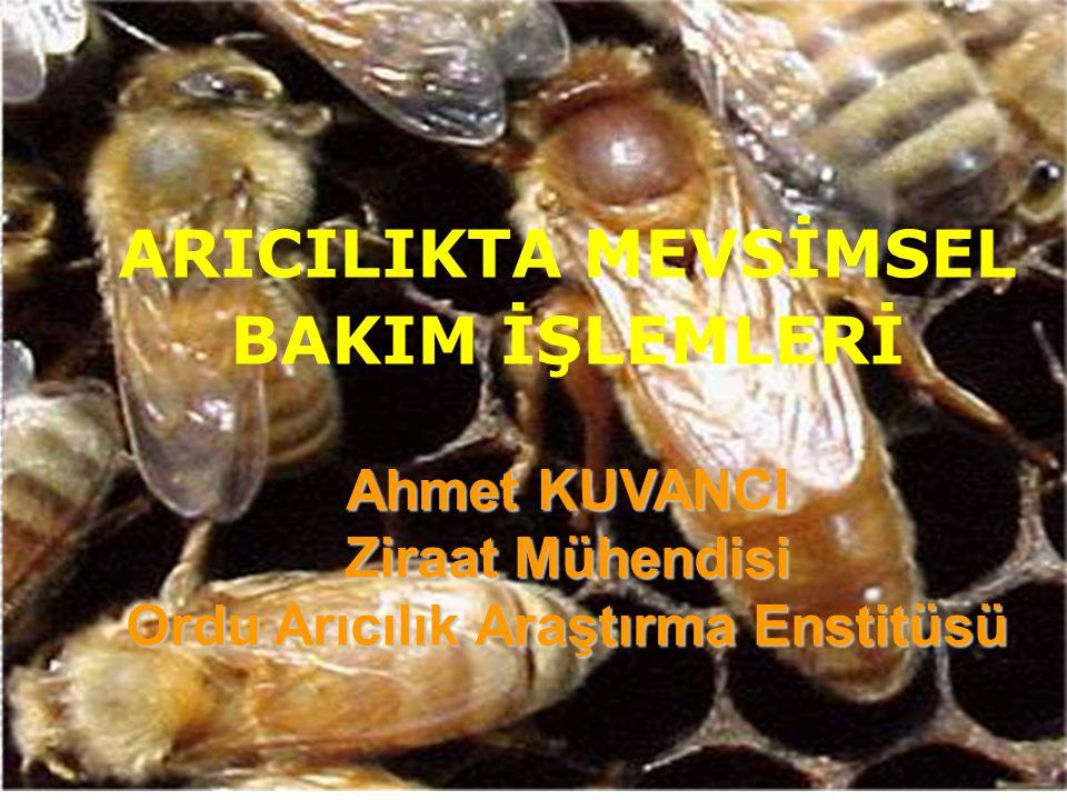 ARICILIKTA MEVSİMSEL BAKIM İŞLEMLERİ Ahmet KUVANCI Ziraat Mühendisi Ordu Arıcılık Araştırma Enstitüsü