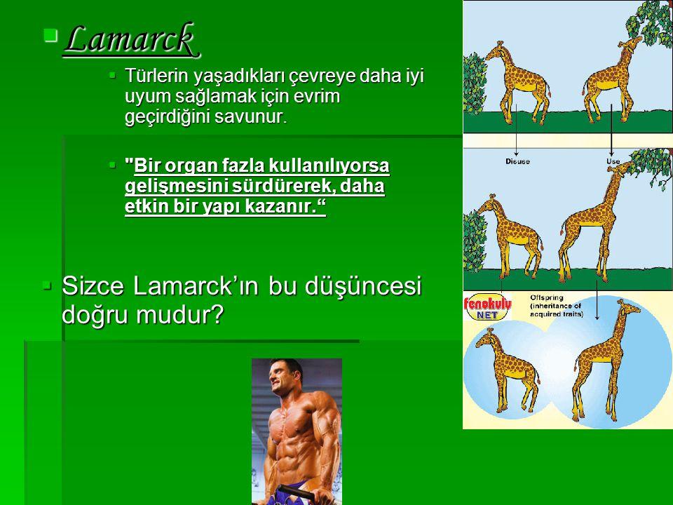 Lamarck Sizce Lamarck'ın bu düşüncesi doğru mudur