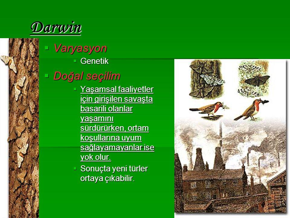 Darwin Varyasyon Doğal seçilim Genetik