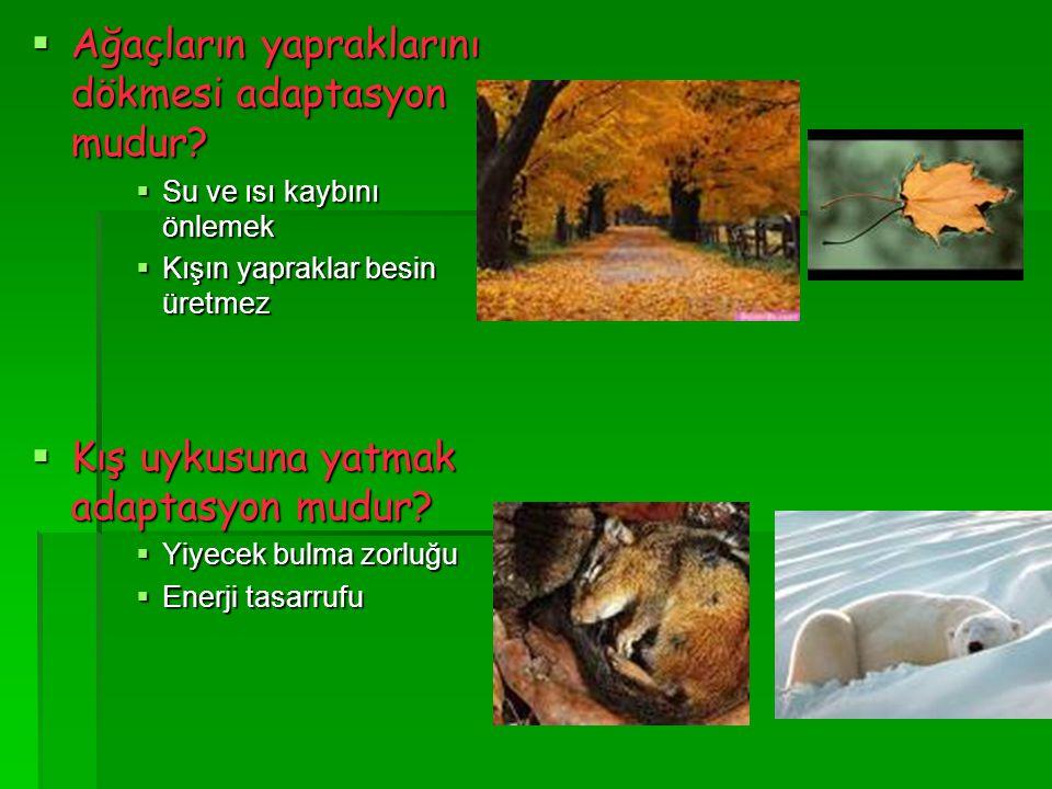 Ağaçların yapraklarını dökmesi adaptasyon mudur