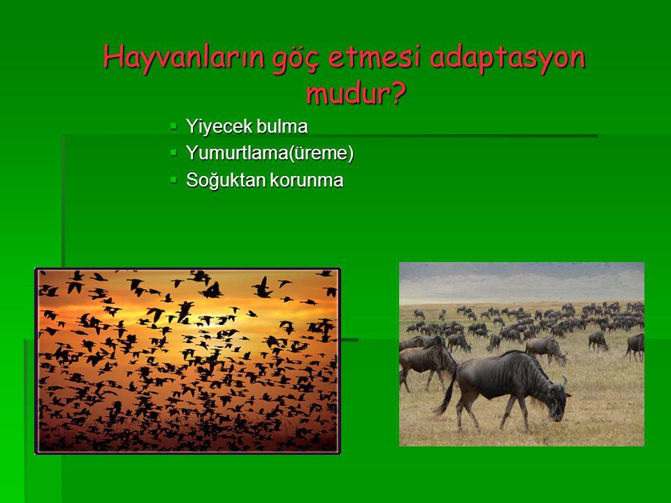 Hayvanların göç etmesi adaptasyon mudur