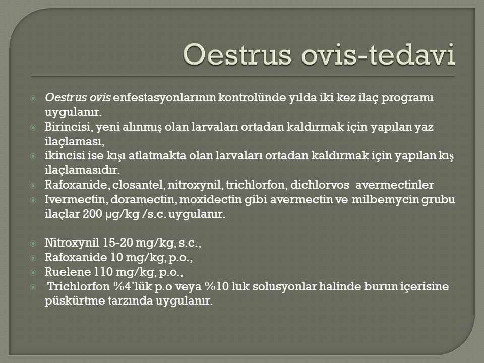 Oestrus ovis-tedavi Oestrus ovis enfestasyonlarının kontrolünde yılda iki kez ilaç programı uygulanır.