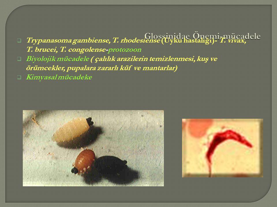 Glossinidae Önemi-mücadele
