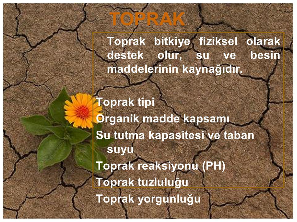 TOPRAK Toprak bitkiye fiziksel olarak destek olur, su ve besin maddelerinin kaynağıdır. Toprak tipi.