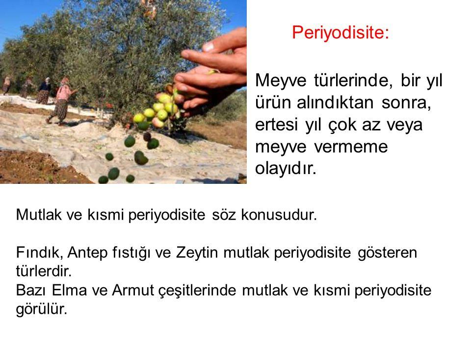 Periyodisite: Meyve türlerinde, bir yıl ürün alındıktan sonra, ertesi yıl çok az veya meyve vermeme olayıdır.