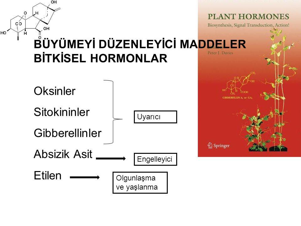 BÜYÜMEYİ DÜZENLEYİCİ MADDELER BİTKİSEL HORMONLAR Oksinler Sitokininler