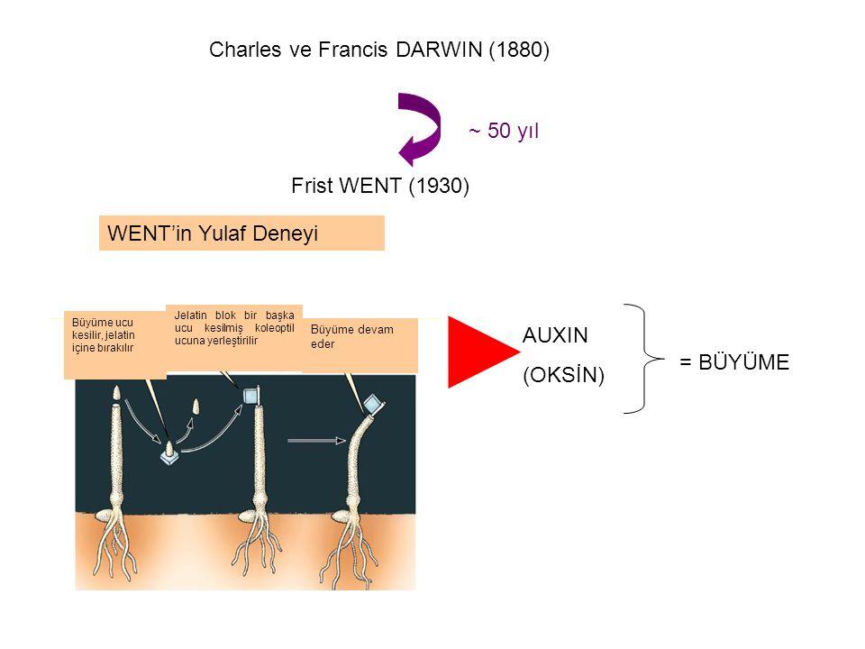 Charles ve Francis DARWIN (1880)