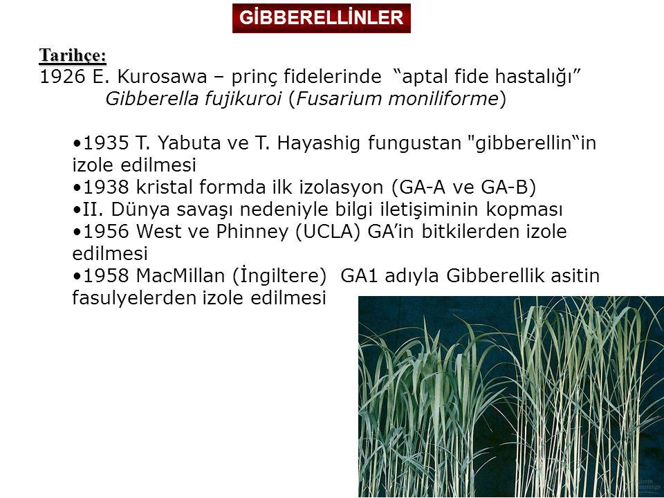 GİBBERELLİNLER Tarihçe: 1926 E. Kurosawa – prinç fidelerinde aptal fide hastalığı Gibberella fujikuroi (Fusarium moniliforme)