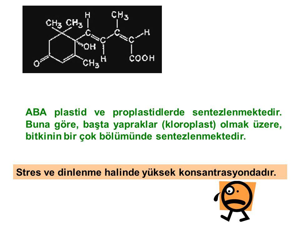 ABA plastid ve proplastidlerde sentezlenmektedir