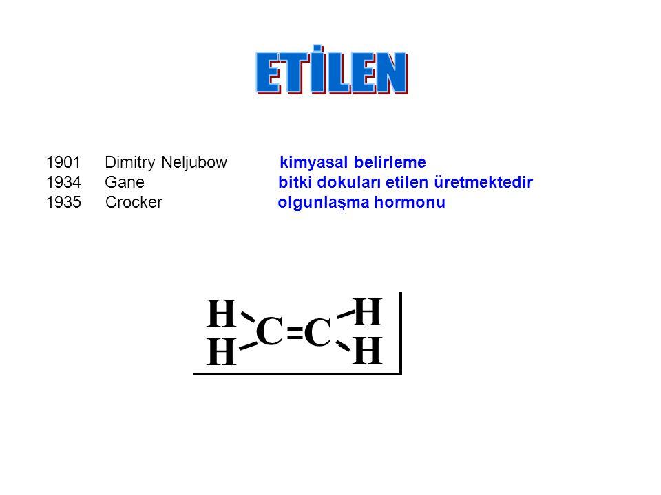 H C ETİLEN Dimitry Neljubow kimyasal belirleme