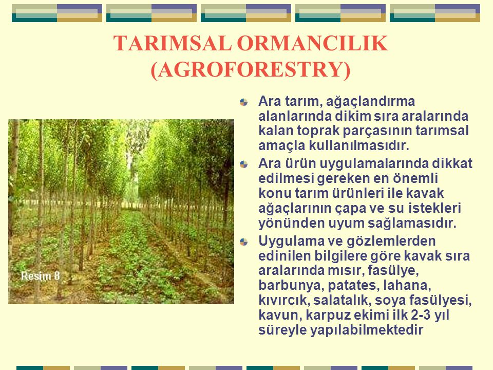 TARIMSAL ORMANCILIK (AGROFORESTRY)