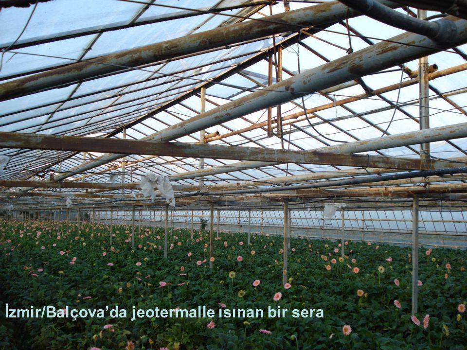 İzmir/Balçova'da jeotermalle ısınan bir sera