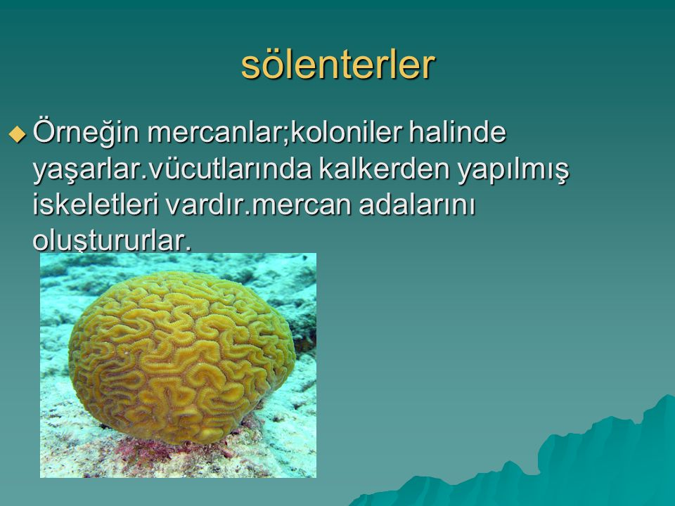 sölenterler Örneğin mercanlar;koloniler halinde yaşarlar.vücutlarında kalkerden yapılmış iskeletleri vardır.mercan adalarını oluştururlar.