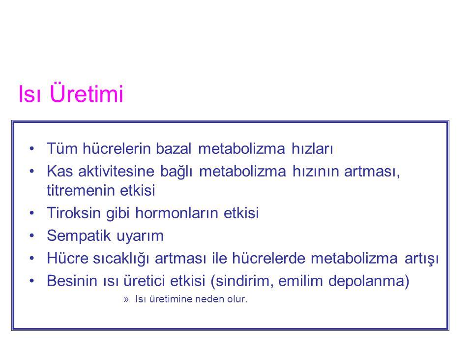 Isı Üretimi Tüm hücrelerin bazal metabolizma hızları