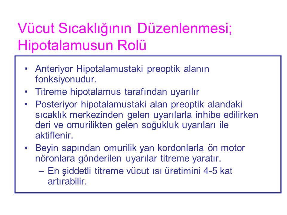Vücut Sıcaklığının Düzenlenmesi; Hipotalamusun Rolü
