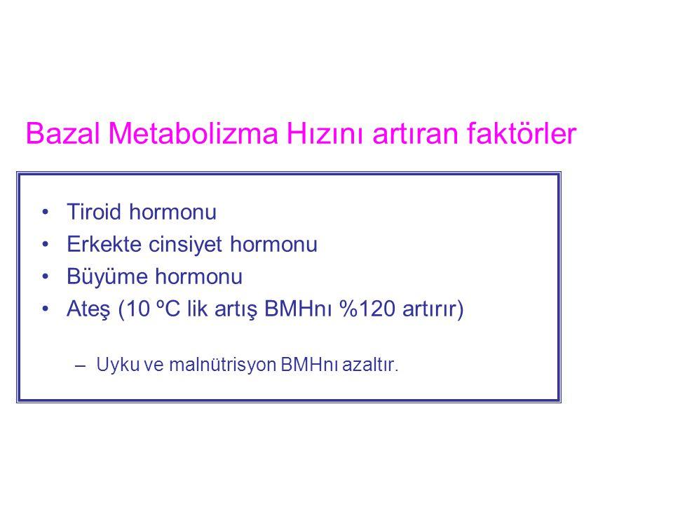 Bazal Metabolizma Hızını artıran faktörler