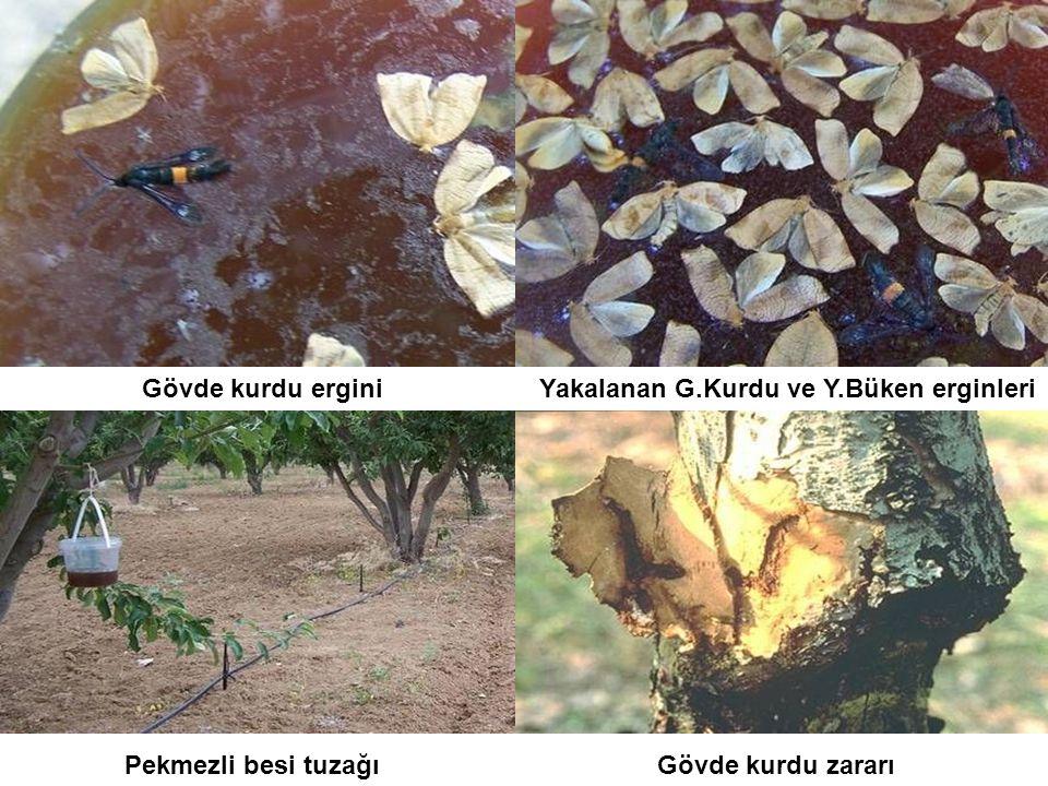 Yakalanan G.Kurdu ve Y.Büken erginleri