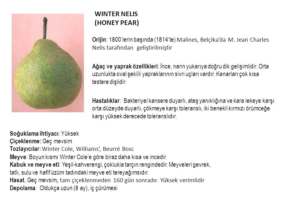 WINTER NELIS (HONEY PEAR)